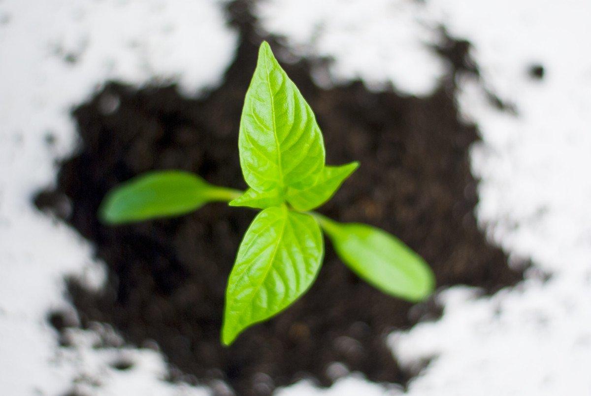 Blog: groeien